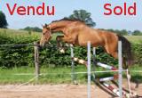 Foto Felin Mansolein Z Merrie Flamenco de Semilly x Totoche du Banney x Athlet Z x Lepanto