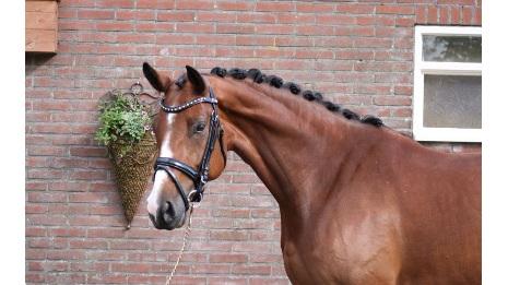 Hera Mansolein Z nakomeling van Haarlem x Centauer Z x Daimler
