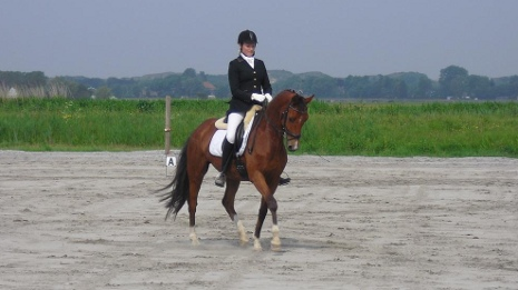 Photo Adonis Mansolein Hongre Royal Dance x Balzflug