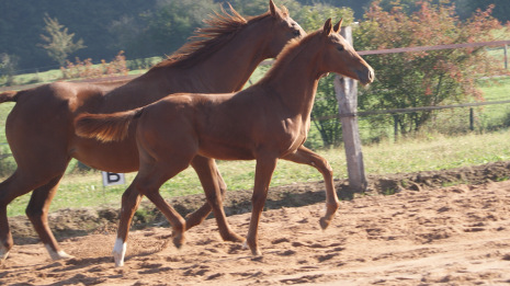 Photo Lady Mansolein Jument Guardian S x Tango x Flemmingh x Purioso