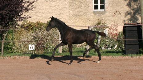 Osiris Mansolein nakomeling Jerveaux x Leonardo da Vinci x Ti King xx x Dom Racing xx