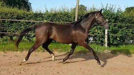 Photo Othello Mansolein Etalon Deparon US x Tango x Flemmingh