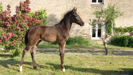 Othis Mansolein verkocht binnen Frankrijk