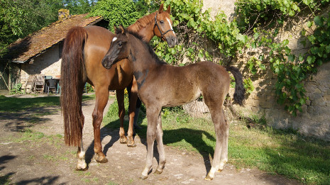 Pavanna Mansolein descendant de For Ferrero x Everdale